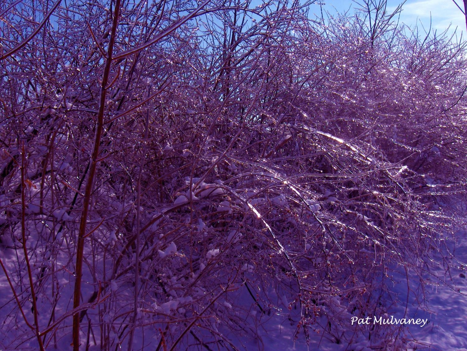 """Blue Winter"" by Pat Mulvaney"